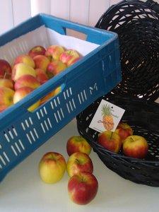 kist elstar appels